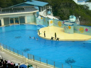 A popular seal show
