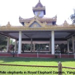 Royal Elephant Garden, Yangon